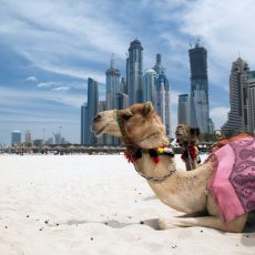 The best beaches in Dubai - Reviewed by LIG